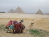 camels-tour-in-cairo