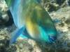 underwater hurghada