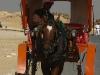 Luxor horse trip