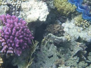 hurghada scuba diving